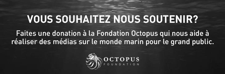 Octopus Foundation
