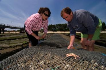 Maria et Jean-Michel Douet travaillent sur leurs poches d'huîtres du Cap-Ferret. © Philippe Henry / OCEAN71 Magazine