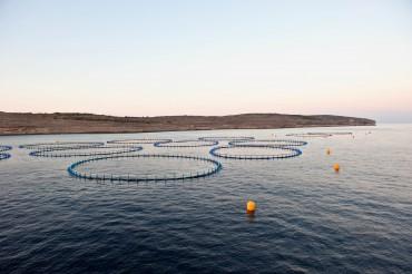 Cages vides d'une ferme d'engraissement de thon rouge à Malte, en juillet 2010 © Philippe Henry / OCEAN71 Magazine