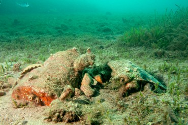 In a few meters of water, we spotted archeological remains © Philippe Henry / OCEAN71 Magazine