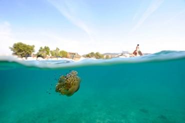 Les eaux de l'Albanie ne sont que très peu pêchées et polluées. Une faune et une flore sauvage peut encore s'y développer, malgré une présence de plus en plus importante du tourisme © Philippe Henry / OCEAN71 Magazine