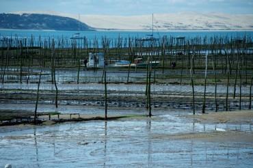 Ferme d'huîtres à marée basse © Philippe Henry / OCEAN 71 Magazine, 2013
