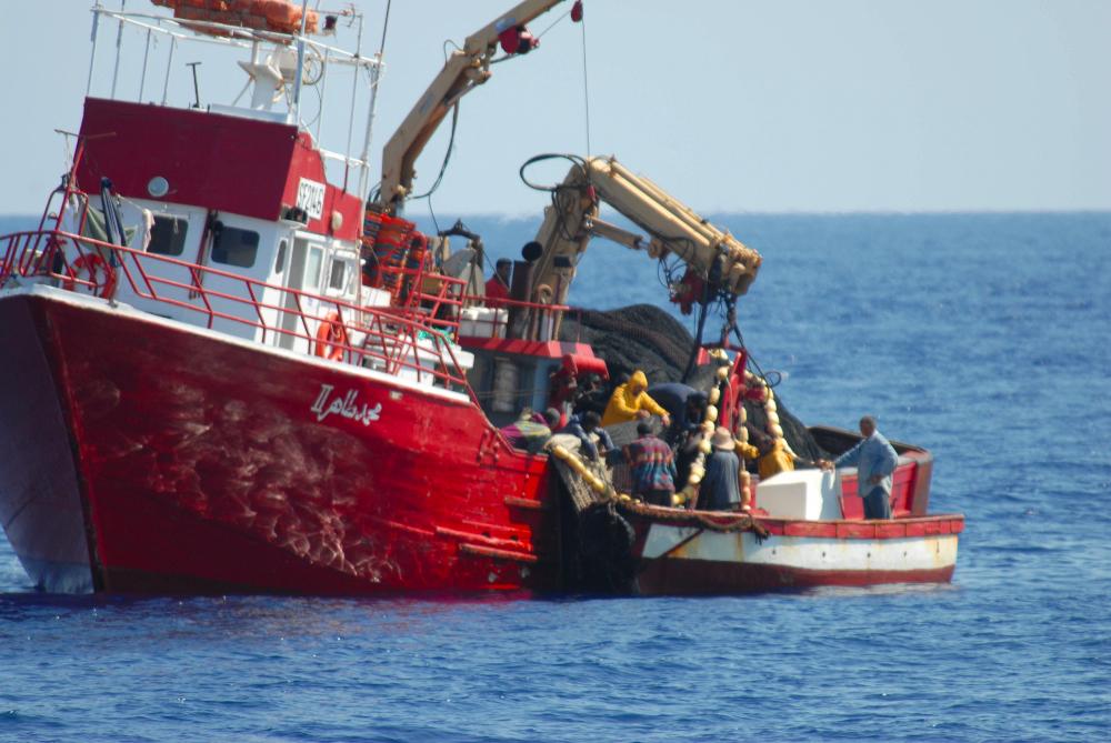 High risks of fraudulent Bluefin tuna fishing in North ...