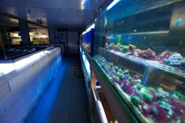 De part et d'autre, des aquariums multicolores nous entourent © Philippe Henry / OCEAN71 Magazine