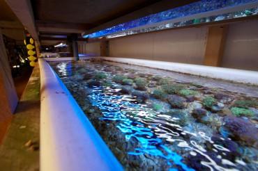 Bac de bouture de coraux durs (Euphyllia) © Philippe Henry / OCEAN71 Magazine