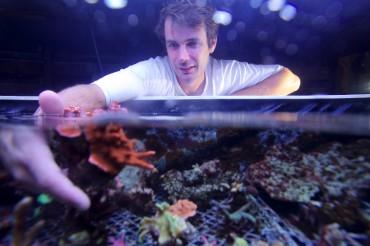 Johan avec un pied mère de Montipora Digitata rouge. Appelé aussi corail doigts/ Velvet Finger Coral © Philippe Henry / OCEAN71 Magazine
