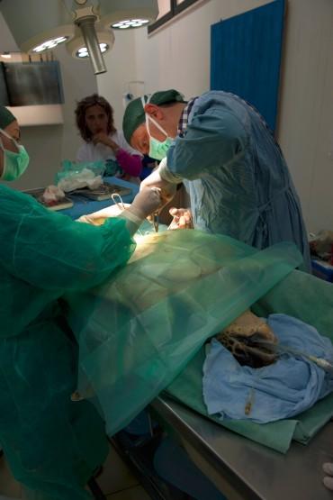 Pendant toute l'opération la tortue est ventilée à la main par Daniela qui veille à sa respiration © Philippe Henry / OCEAN71 Magazine