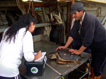 After accidentally catching a turtle in his nets, a Sicilian fisherman brings it to Daniela Freggi. It will go in surgery in the following days © DR