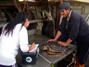Un pêcheur sicilien apporte à Daniela Freggi une tortue qu'il a capturé dans ses filets. Cette tortue a du fil nylon qui lui sort de la bouche. Elle sera opérée dans les jours qui suivent. © DR
