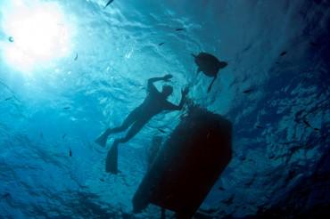 Les eaux turquoises de Lampedusa retrouvent un peu de leur faune marine avec la remise en liberté de tortues © Philippe Henry / OCEAN71 Magazine