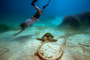 """""""Humérus"""" se fait surveiller par Maurizio. La tortue est malheureusement paralysée des pattes arrières © Philippe Henry / OCEAN71 Magazine"""
