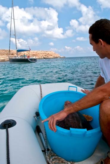 La première tortue va être relâchée au milieu de la baie, et y est amenée à bord du zodiac © Philippe Henry / OCEAN71 Magazine
