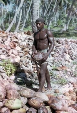 Activité économique principale de l'archipel, la récolte des noix de coco est un travail difficile et harassant où on ne peut compter que sur ses bras. (1968) © Kirby Crawford