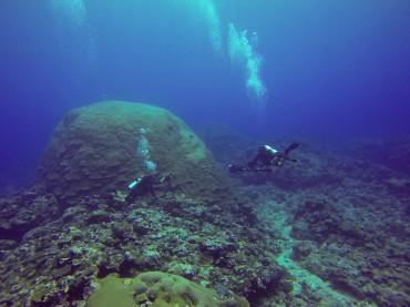 """Le géant de corail """"Fale Bommie"""" est considéré comme l'une des plus anciennes formes de vie sur terre © Sophie Ansel / OCEAN71 Magazine"""