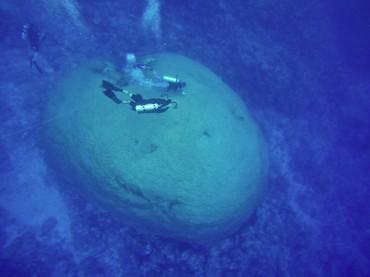 """La circonférence de """"Fale Bommie"""" a été mesurée par les scientifiques. Elle atteint 41 mètres© Sophie Ansel / OCEAN71 Magazine"""