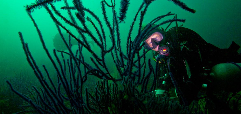 Des plongeurs tentent de retrouver l'un des premiers trésors naturels de la région du golfe persique, les perles © Francis Le Guen / OCEAN71 Magazine