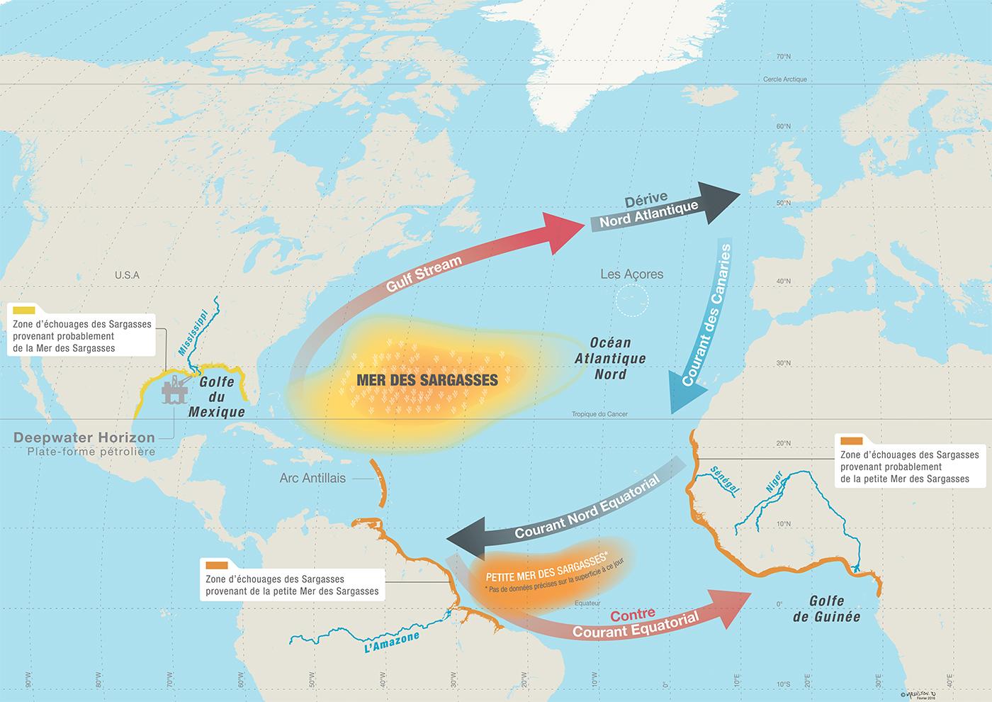 Schéma général des courants d'Atlantique et de concentration des sargasses © Rodolphe Mélisson / OCEAN71 Magazine