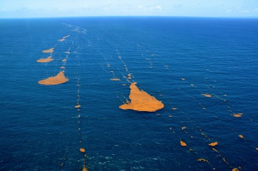 Trails of sargassum drifting according to the wind's direction © Franck Mazéas