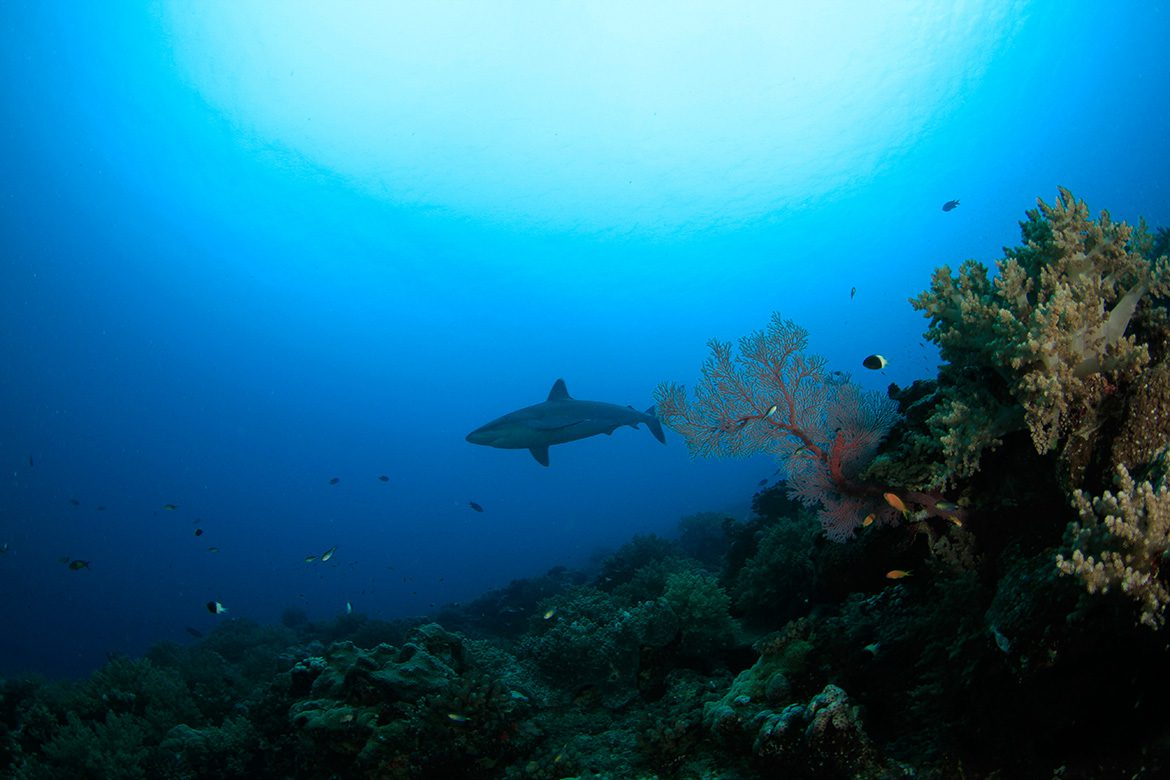 Requin cover