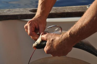 Skillful hands are at work on the Cap Requins boat. A smart-drumline is being baited for the night © Andy Guinand / OCEAN71 Magazine